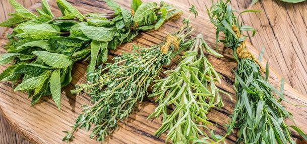 Les plantes aromatiques stars de la cuisine